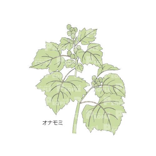 オナモミの画像 p1_21